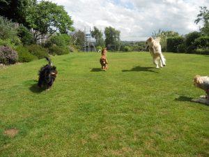 Dogs the garden.