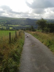 Aussie Dog Care walks in the countryside.