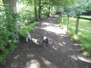 Dog Walking at Brabyns Park!