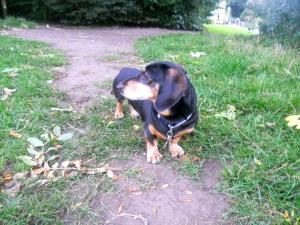 Dog Walks at Marple Dale.